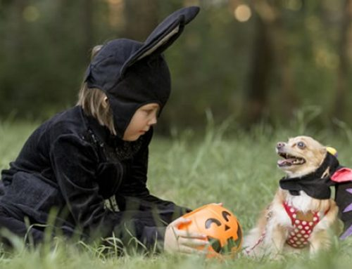 3 Tips for Safely Dressing Up Your Pet this Halloween