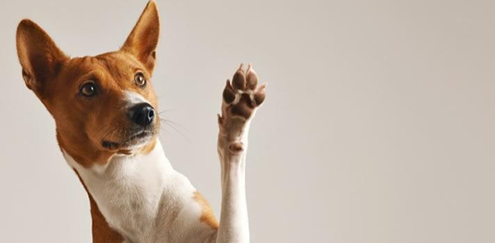 4 FAQ About Canine Hyperkeratosis