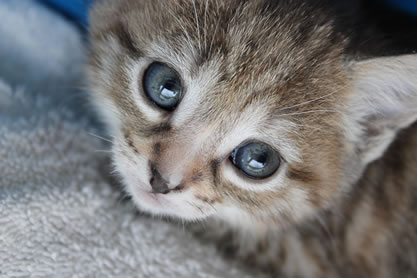 Adopt a Kitten | Wards Corner Animal Hospital - Loveland, OH