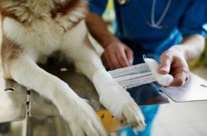 Dr. Henehan - Emergency Veterinary Pet Care