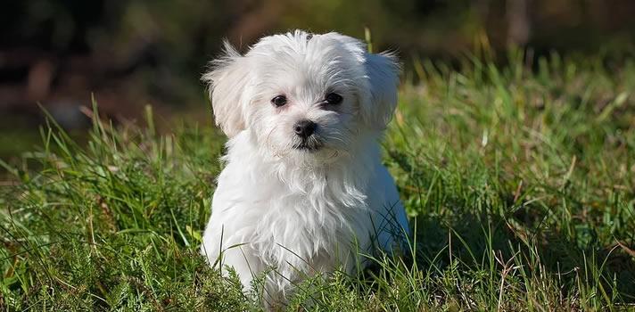 A Guide to Canine Parvovirus - Wards Corner Animal Hospital - Loveland, Ohio