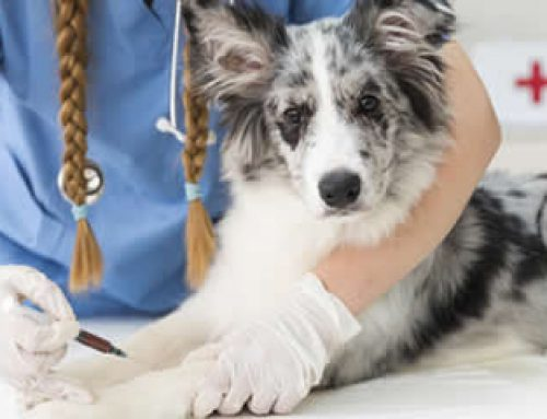 A Guide to Dog Vaccinations