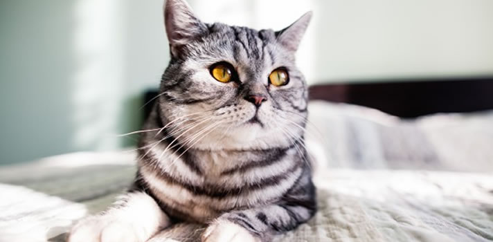 3 Tips to Help Your Cat Lose Weight | Loveland Vet