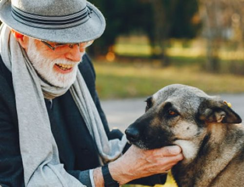 3 Pet Care Tips for Senior Dogs