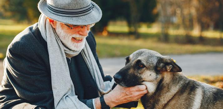 3 Pet Care Tips for Senior Dog | Wards Corner Animal Hospital | Loveland, Ohio