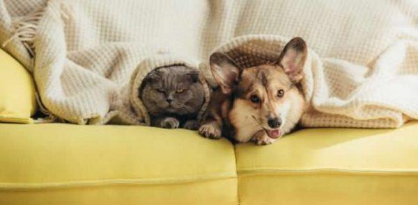 The Importance of Pet Dentistry   Wards Corner Animal Hospital   Loveland, Ohio