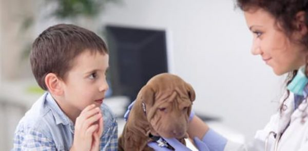 3 Essential Pet Vaccinations   Wards Corner Animal Hospital   Loveland, Ohio