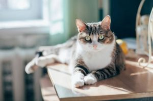 Dr. Henehan - Preventative Veterinary Pet Care