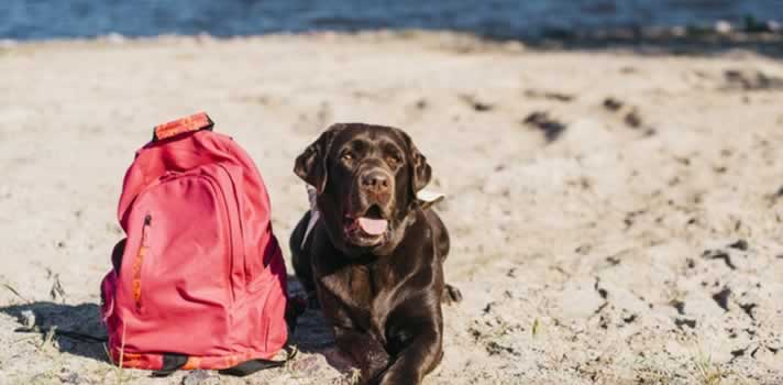 How to Keep Your Dogs Safe During the Summer Months Wards Corner Animal Hospital   Loveland, Ohio