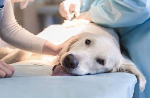 Dr. Henehan - Surgical Veterinary Pet Care